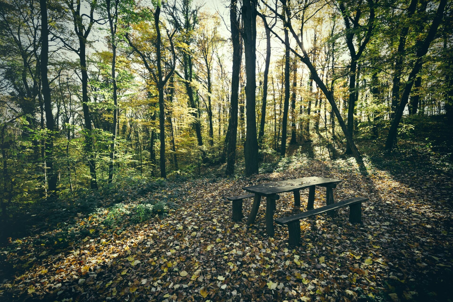 Bench in green forest